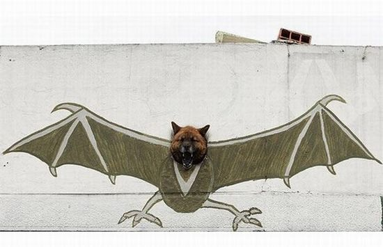 coolest picture of the day bat dog