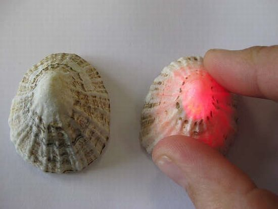 electronics in limpet shells