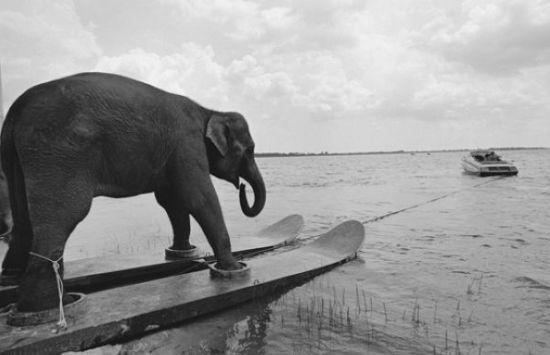 elephant sailing