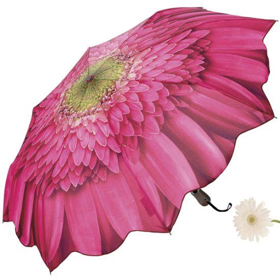 gerbera daisy umbrella LtOYh 6648
