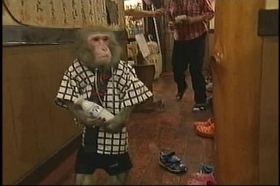 monkey waiters3 Q1q1H 6648