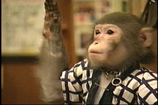 monkey waiters Nn2PU 6648