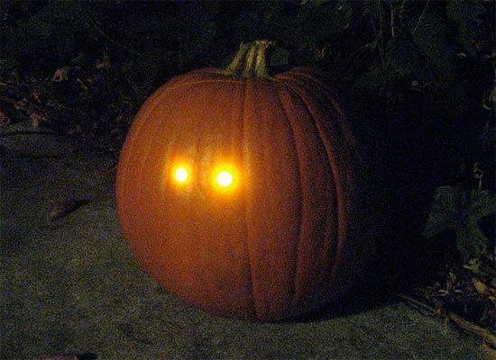 night detecting pumpkin o9Bji 1333