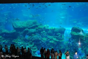 Middle-Eastern Delights – Dubai Aquarium and Discovery Centre