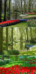 Netherlands- Keukenhof
