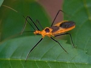 bugs-close02-bug-ed2sharp