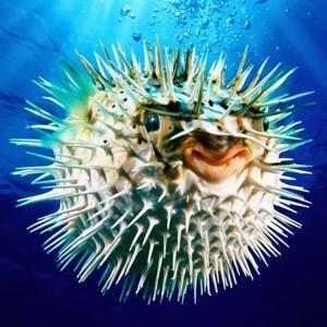 pufferfish-main