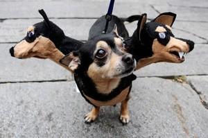 0519three-headed-dog-costume