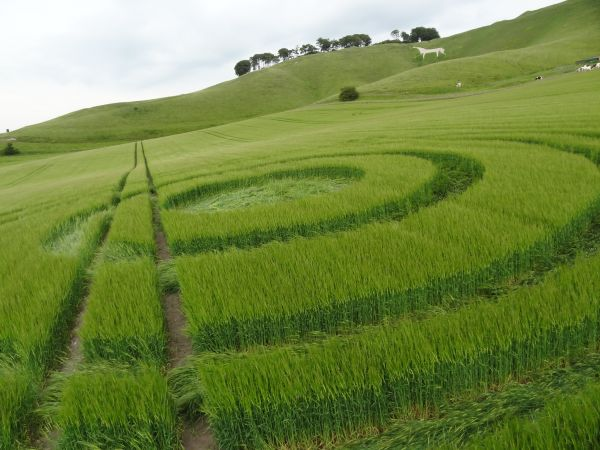 Mysteries of Crop Circles (2)