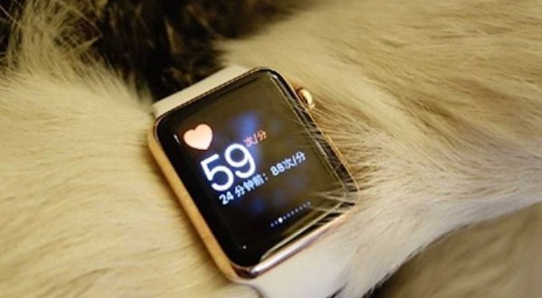 Gold Apple watches