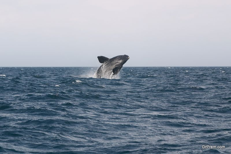 facts-about-The-Blue-Whale