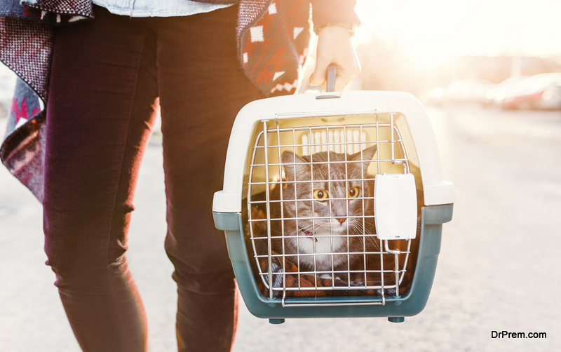 woman carrying cat in pastic cage