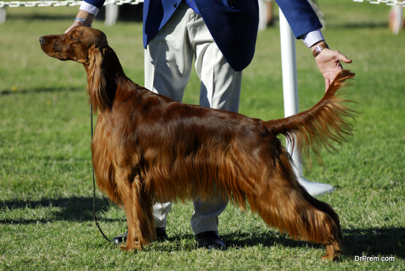 Prepare for Your First Dog Show
