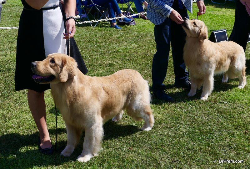 Well Groomed Dogs